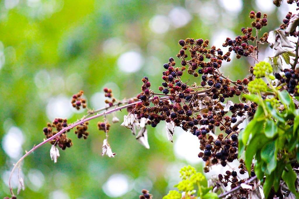 SenSI Garden Berries